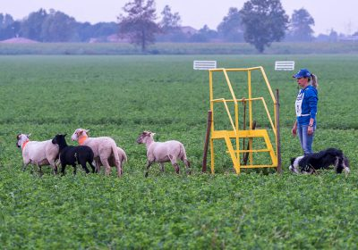 Richieste organizzazione Trial - Associazione Italiana Sheepdog