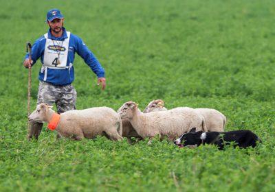 Campionati Continentali Sheepdog - Associazione Italiana Sheepdog
