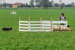 Campionato Mondiale Sheepdog - Associazione Italiana Sheepdog